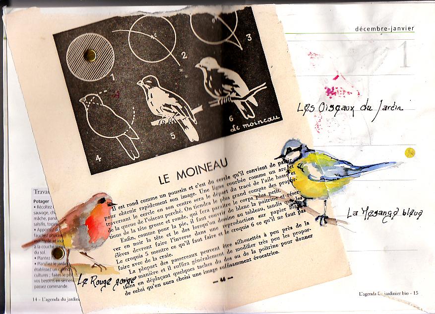 sur une feuille d'un vieux livre expliquant comment dessiner les moineaux au tableau, aquarelles d'un rouge gorge et d'une mésange