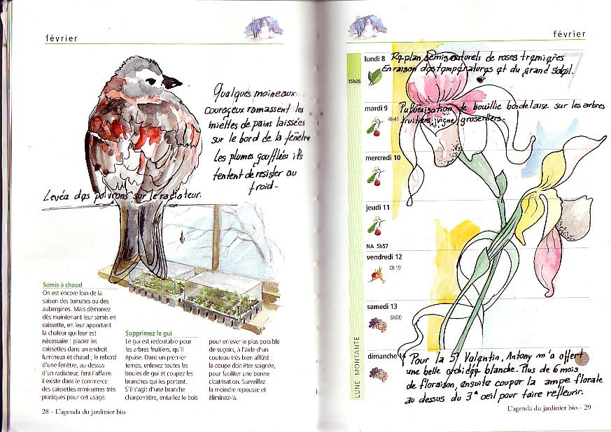 extrait carnet de mon jardin aquarelle d'un moineau dans un vieil agenda