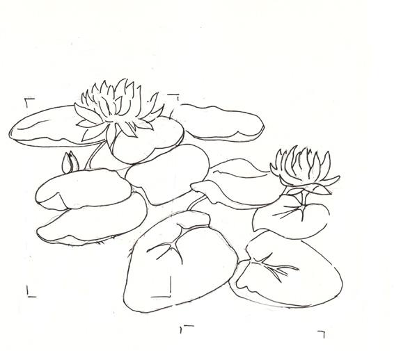 Le blogue du monde en bandouliere - Nenuphar dessin ...
